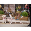 Laisse Urban Rope™ Dog Copenhagen - Nouvelle collection